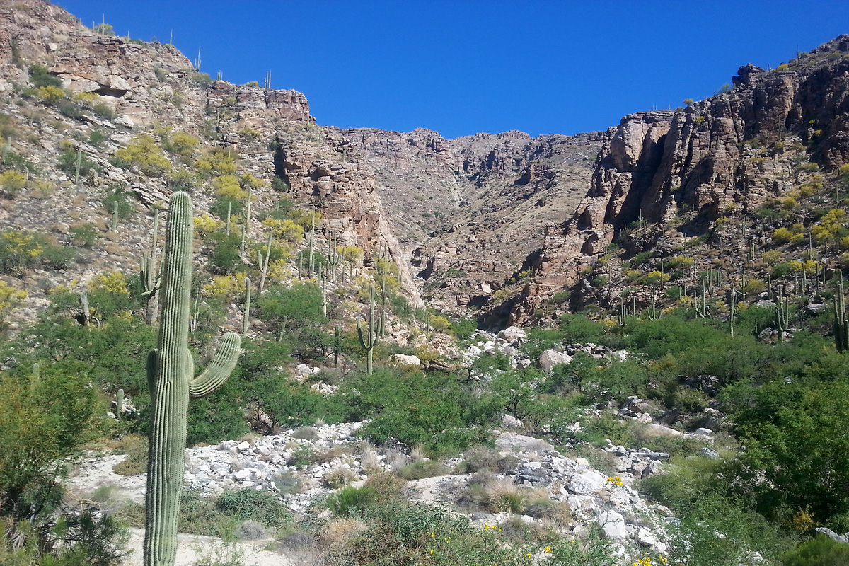 Soldier Canyon, Santa Catalina Mountains, from the Catalina Highway