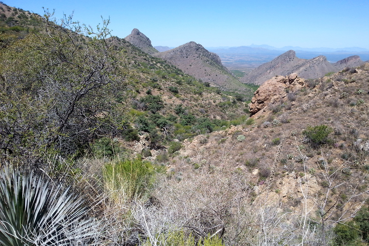 Montosa Canyon in the Santa Rita Mountains