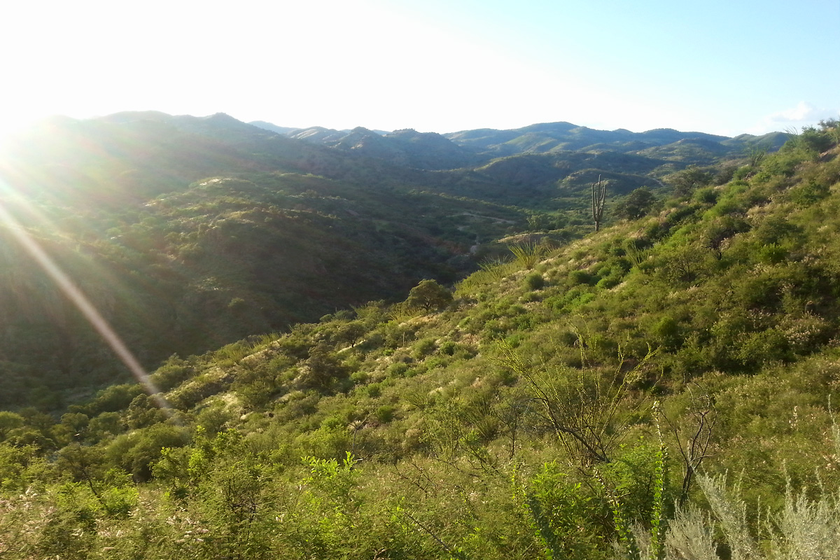 Looking towards Oro Blanco Mine, from California Gulch Rd