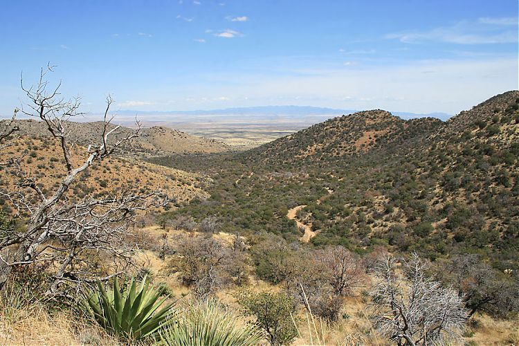 Middlemarch Pass, Dragoon Mountains, Cochise County