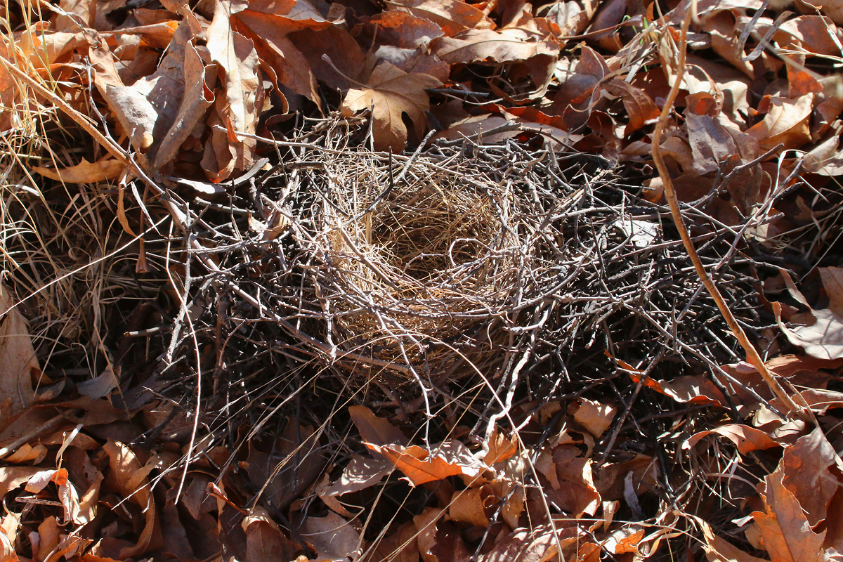 Downed nest