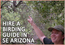 Arizona Birding Guide Services